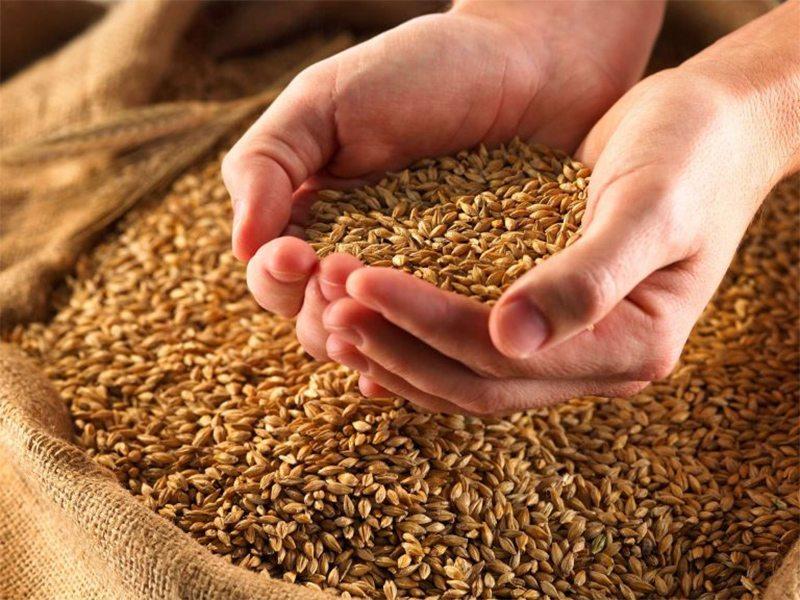 зерно, фермери, урожай