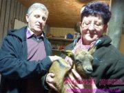 На Херсонщині тваринам люди позаздрити можуть