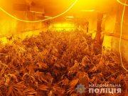 Херсонские полицейские ликвидировали нарколабораторию по выращиванию элитных сортов марихуаны с миллионными сделками