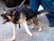 На Херсонщине сосед травил супругов собакой