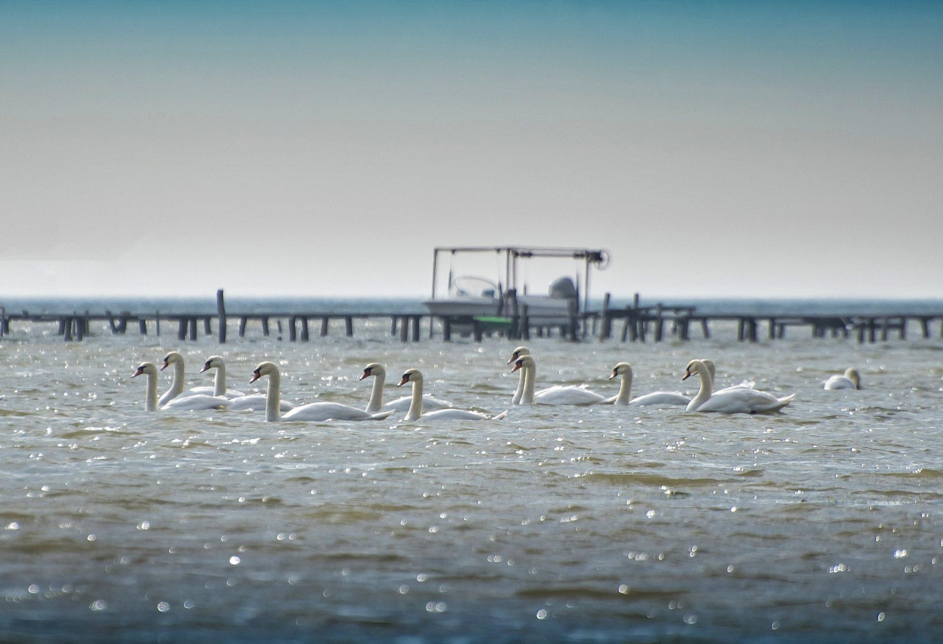 Лебединый флот Скадовска