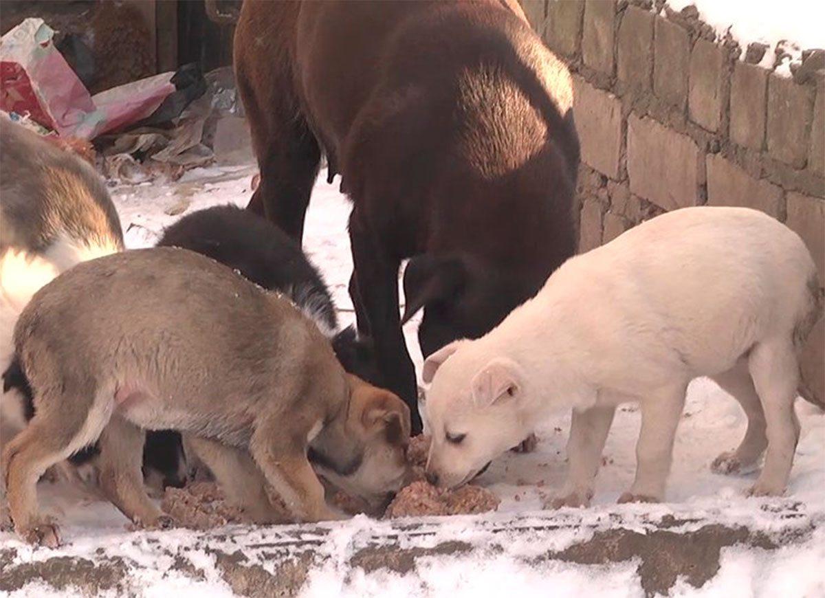 Херсон, зима, тварини