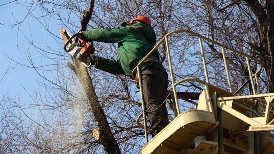 У Новій Каховці хочуть встановити мораторій на обрізку дерев