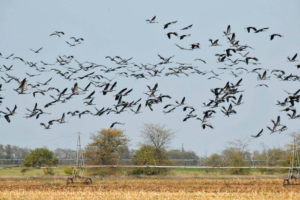 """Аграрії Херсонщини готові  долучитися до з'ясування причин загибелі птахів і пропонують підписати Меморандум із заповідником """"Асканія-Нова"""""""