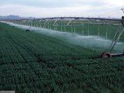 На Херсонщині зрошувальних земель щороку більшає