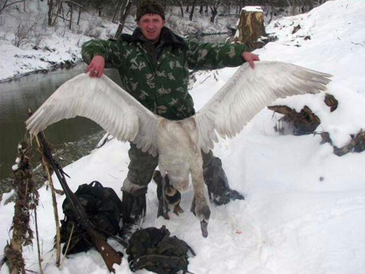 Херсонские полицейские подтвердили факт убийства лебедей в Николаевской области