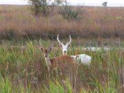 На Херсонщині рідкісних тварин буває забагато