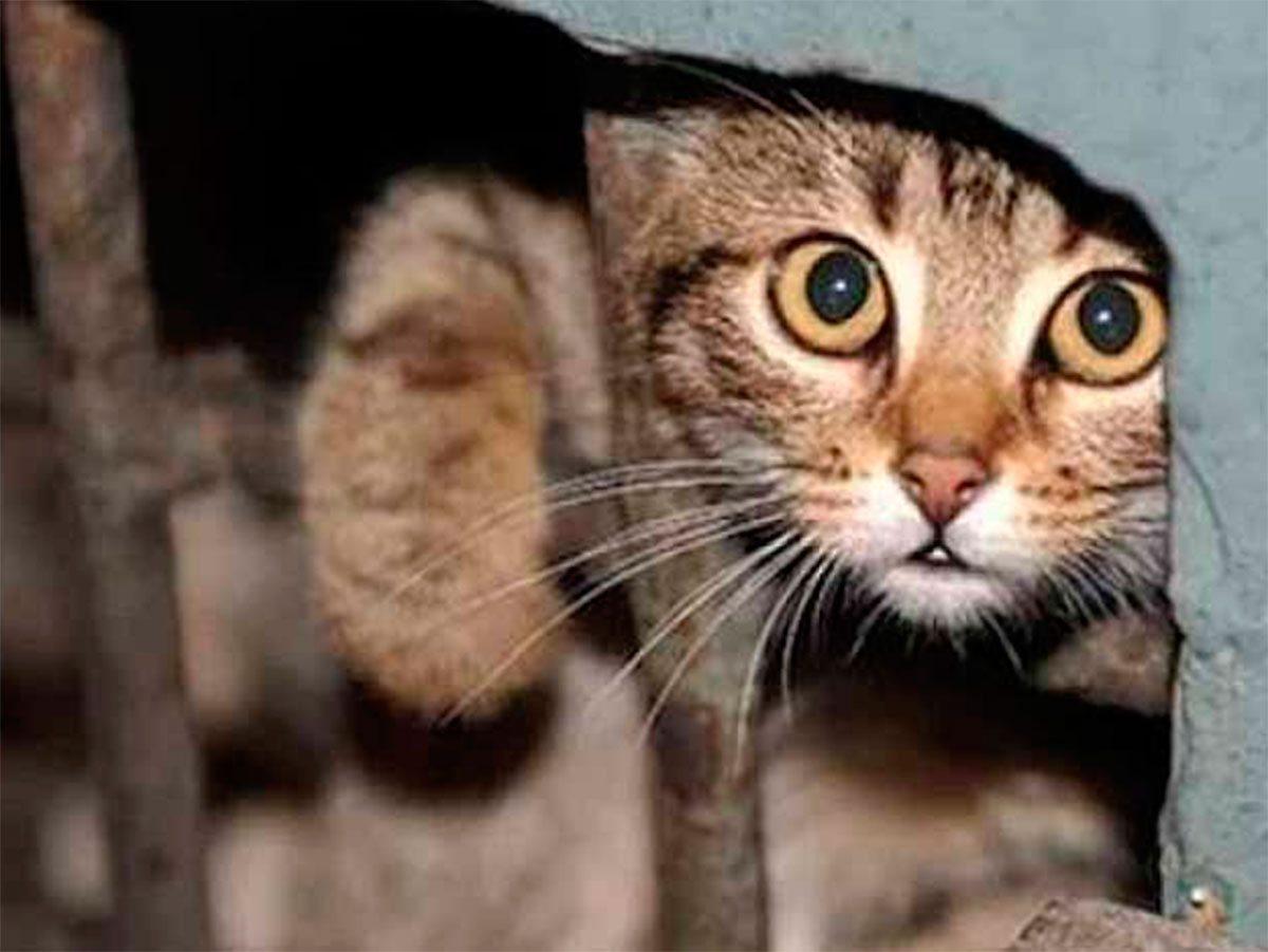 Херсон, коти, Яновський