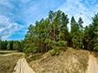 Про долю рукотворних лісів Херсонщини