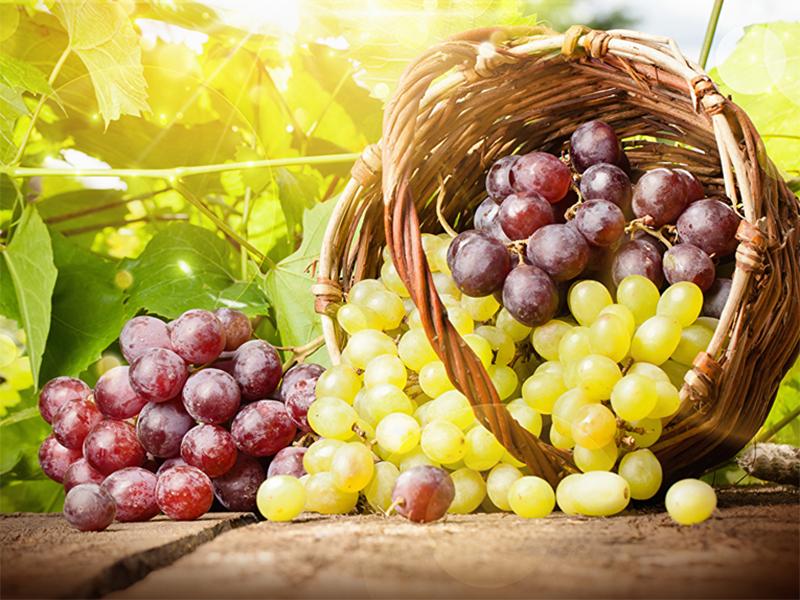 Виноградного изобилия ожидают на Херсонщине
