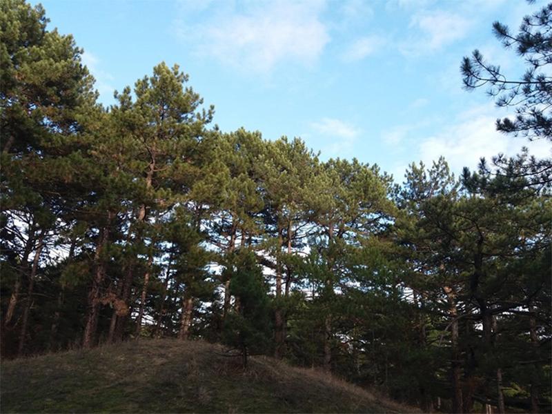 Чи врятують ландшафтні парки рукотворні ліси Херсонщини?