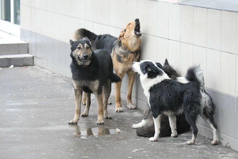 В Херсоне собачья стая терроризирует пенсионерок