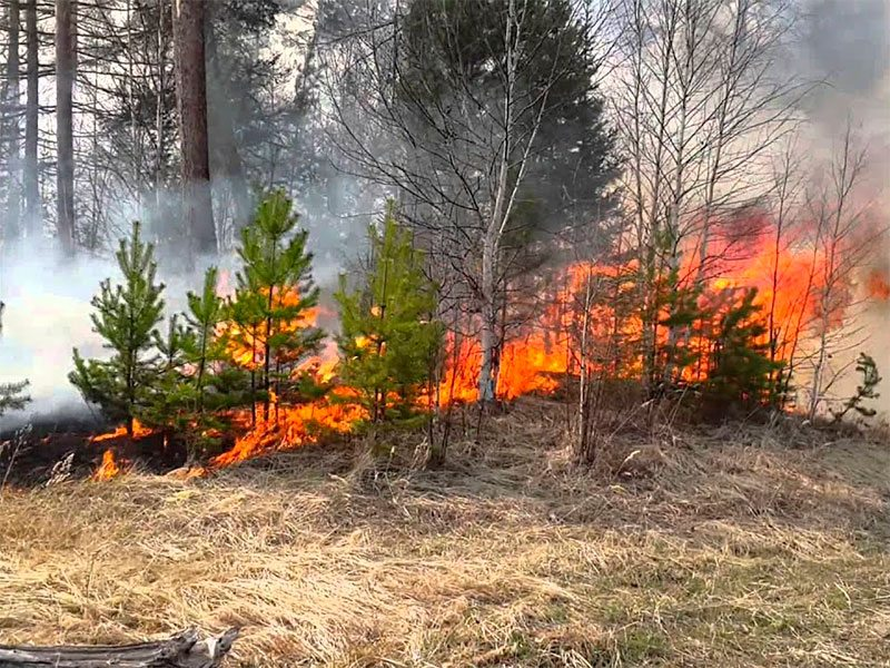 Поджоги леса на Херсонщине считают случайными