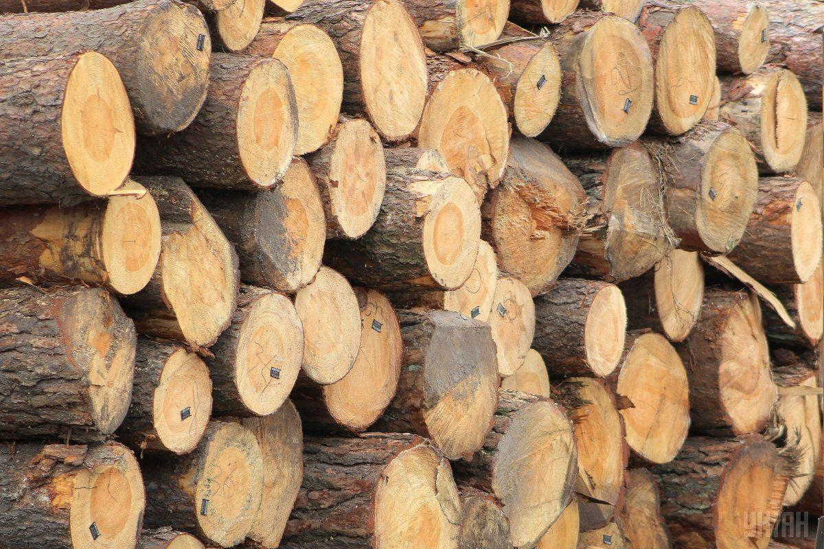 Херсонщина среди лидеров по вырубке леса