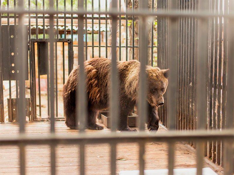 Курортный сезон на Херсонщине открыли медведи
