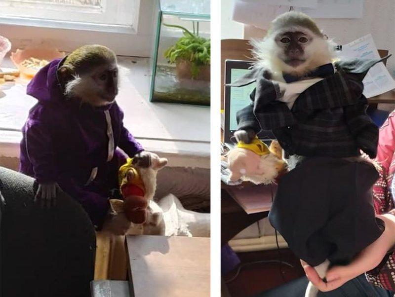 гардероб, обезьяны, пошив
