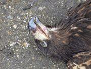 В заповеднике на Херсонщине добавилось погибших птиц (Фото)