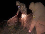 Херсонские пограничники очистили Джарылгачский залив от браконьерских ловушек