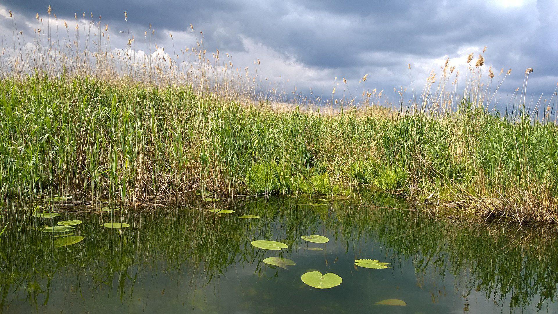 унікальне озеро, водойма, врятували