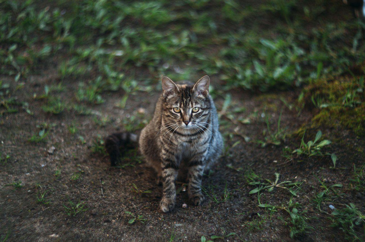 коти, екосистема, горсовет