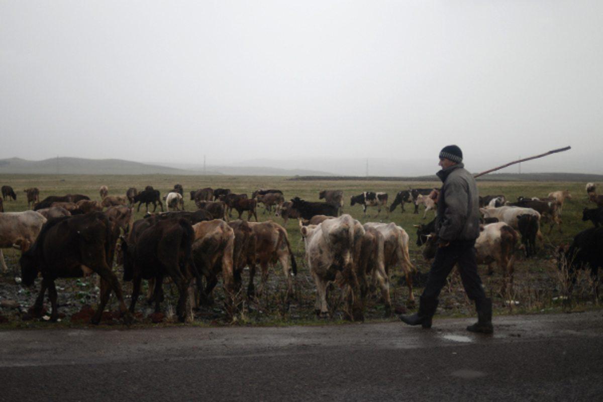 Голопристанский район,забить до смерти,Черниговская область