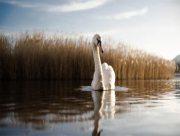 В окремих районах Херсонщини введено карантин через випадки пташиного грипу