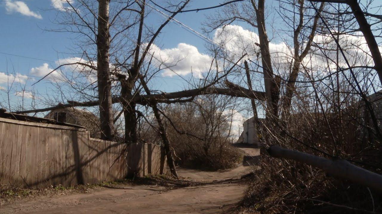 дерево, электроопора, херсоноблэнерго