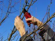 На Херсонщине садоводческий сезон начался с травм