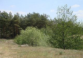 Парковые и лесные насаждения на территории Херсонской области «просят о помощи»!
