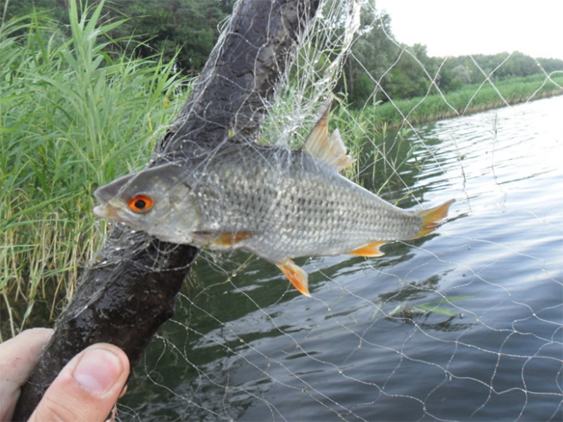 Дорогу к нерестилищам под Херсоном рыбе перекрыли браконьеры
