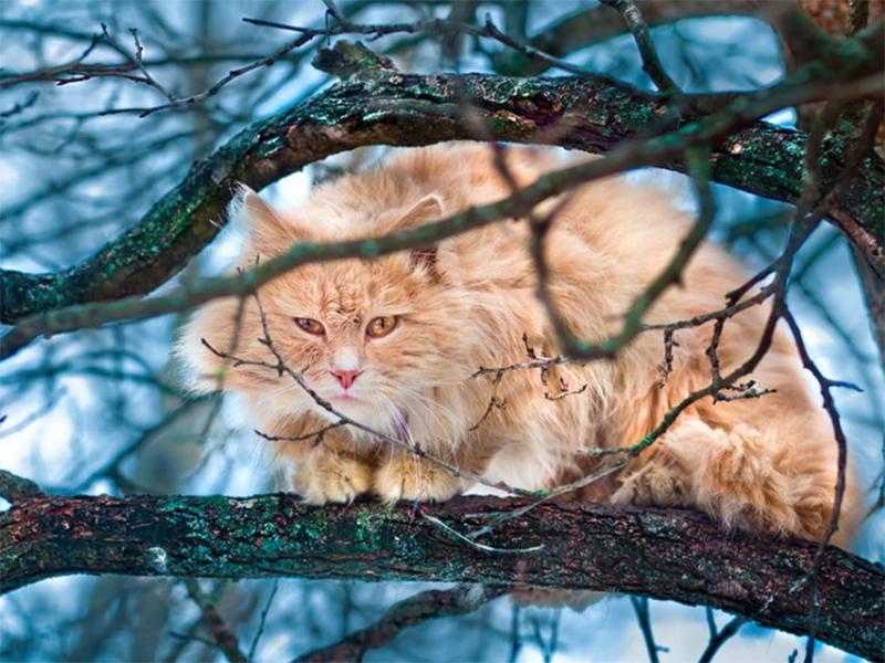 Ради спасения кота женщина в Херсоне поплатилась здоровьем