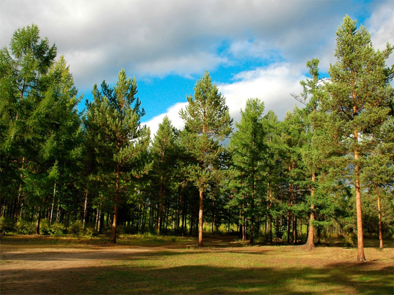 Хороші й погані новини для лісівників Херсонщини