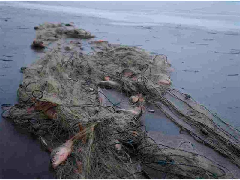Счет браконьерским уловам на Херсонщине в нерест уже идет на центнеры