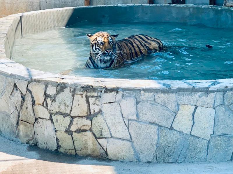 Купальный сезон на Херсонщине открыли тигры