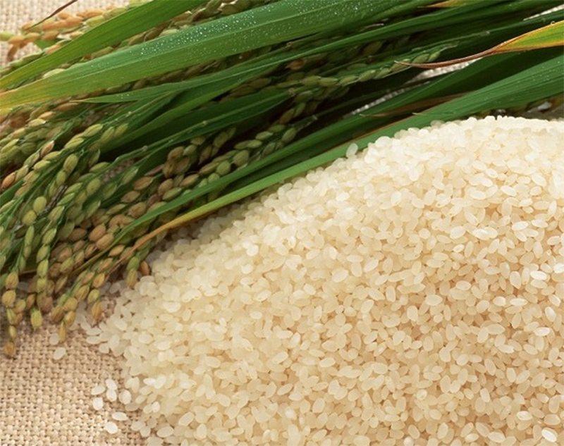 рис, поле, сівба