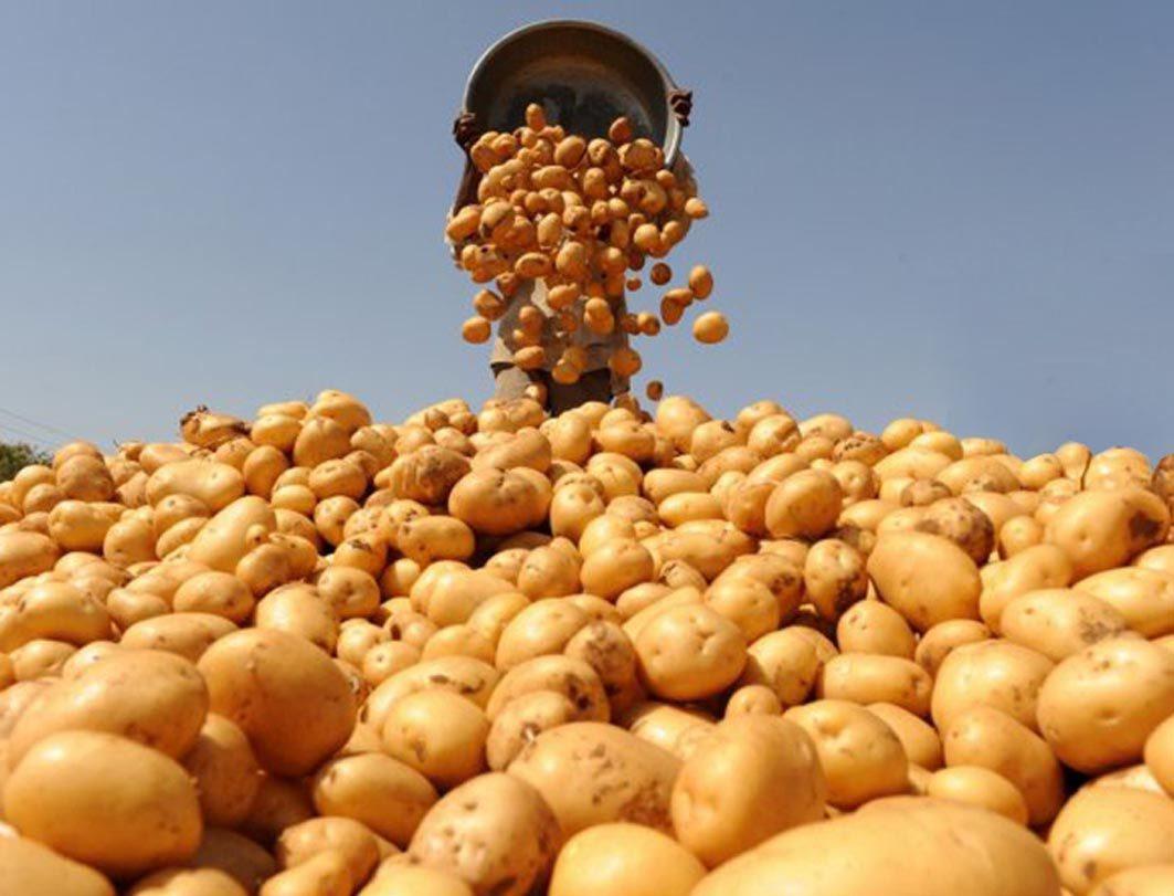 магазин, картофель,  покупатели