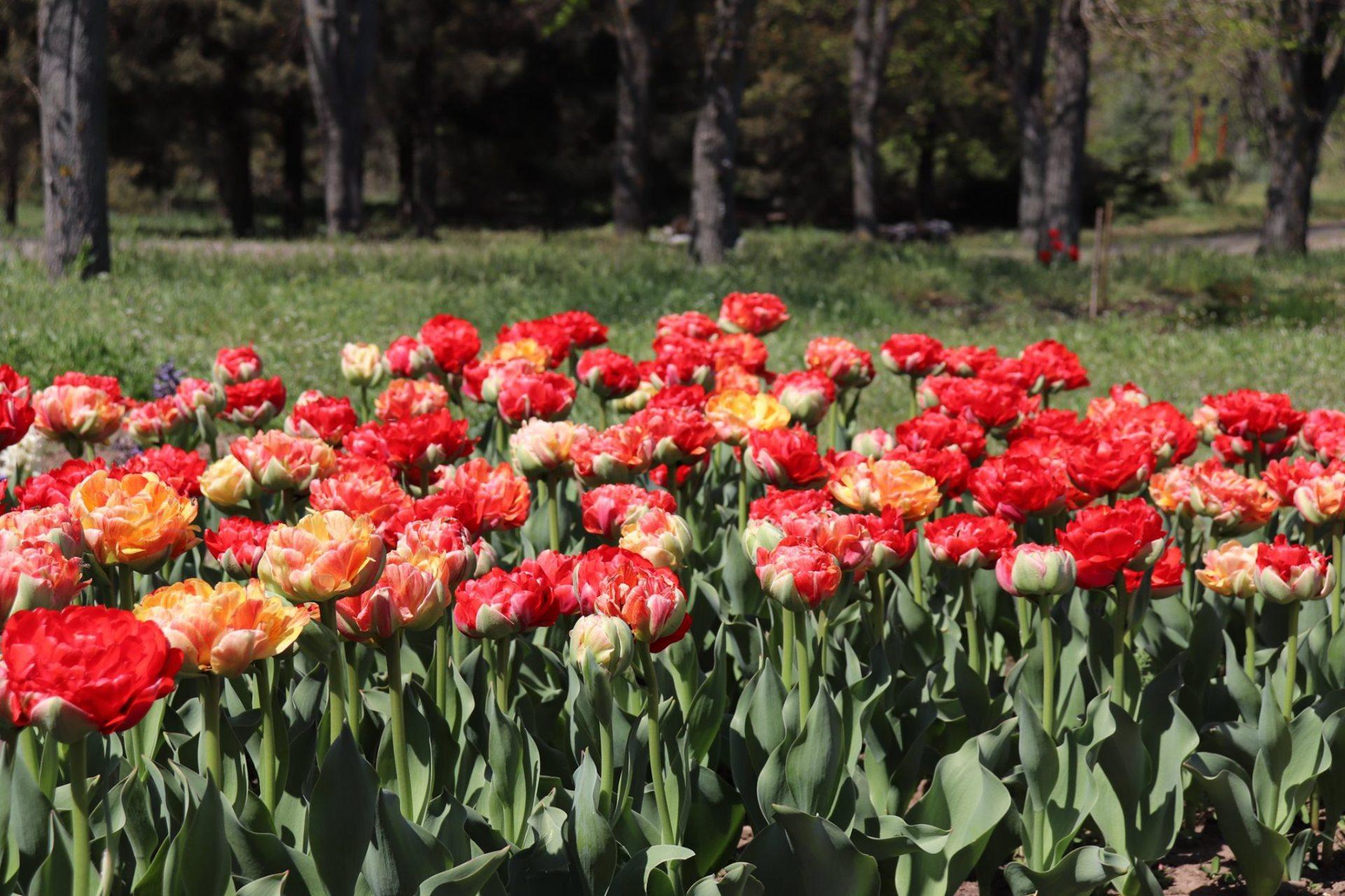 сад, ХДУ, цветы