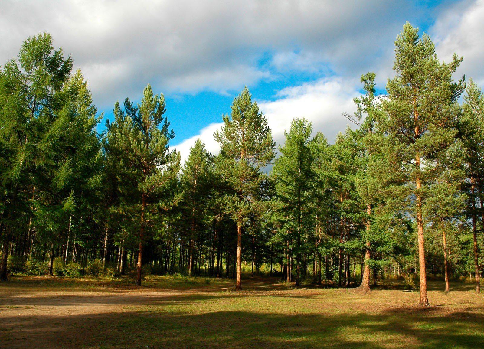 ліси, закрито, рейди
