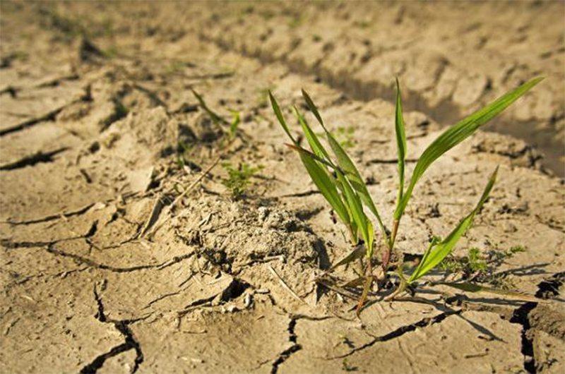 спека, аграрії, засуха