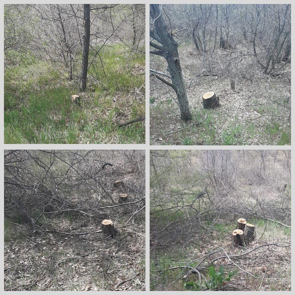 браконьєр, поліцейські, лісник