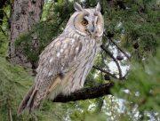 В День птиц в Херсонском краеведческом музее рассказали о совах