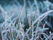 На Херсонщине ожидаются заморозки