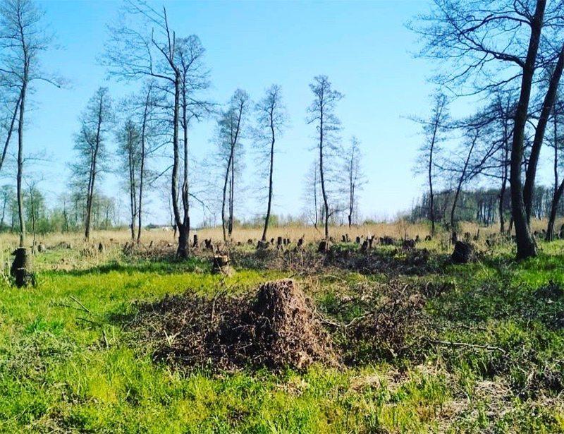 деревья, лесорубы, убытки