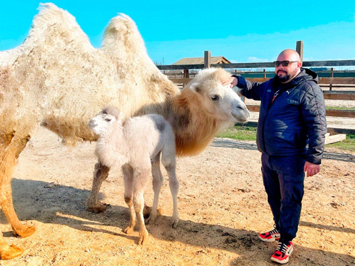 Геническ, верблюд, Яновский