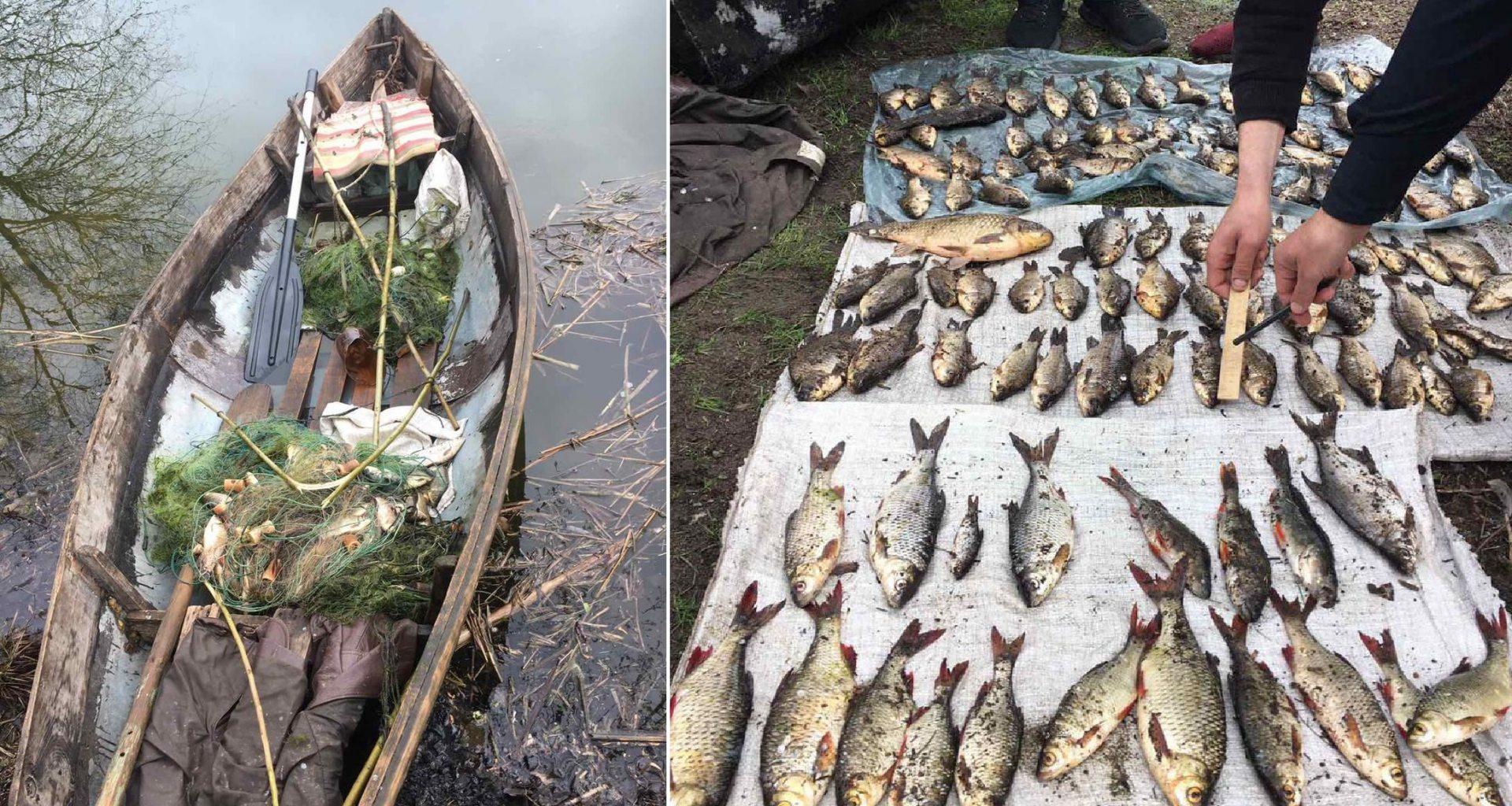 рыба, неерест, браконьеры
