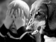 На Херсонщине собака вцепилась клыками в лицо малыша