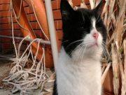 На Херсонщині у фермера працюють коти