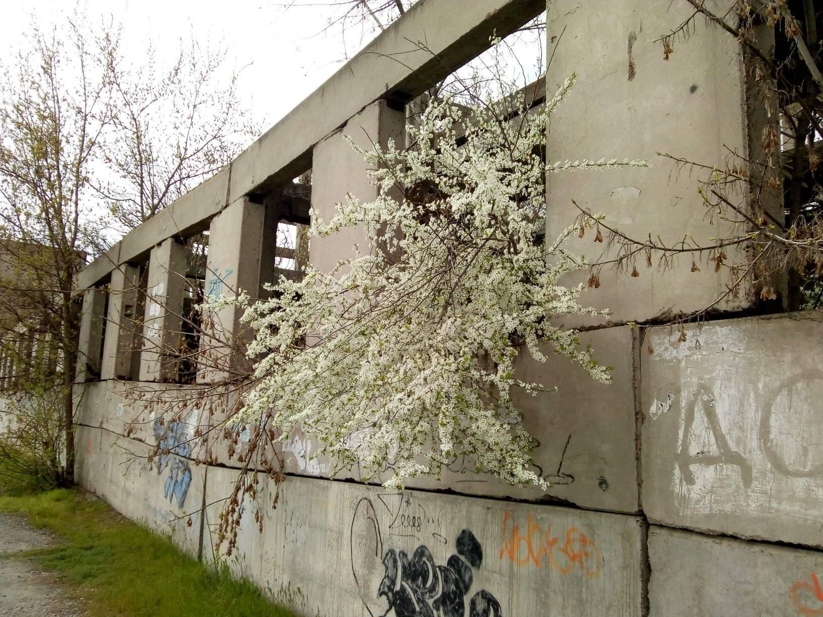 В Херсон прорывается весна