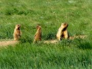 У степи Херсонщини повернулися рідкісні звірята