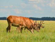 Коли херсонці зможуть відвідати національні природні парки та біосферний заповідник